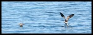 oiseaux iles kuriat