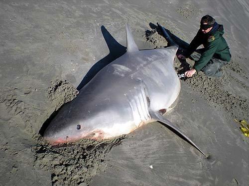 requin hammam lif