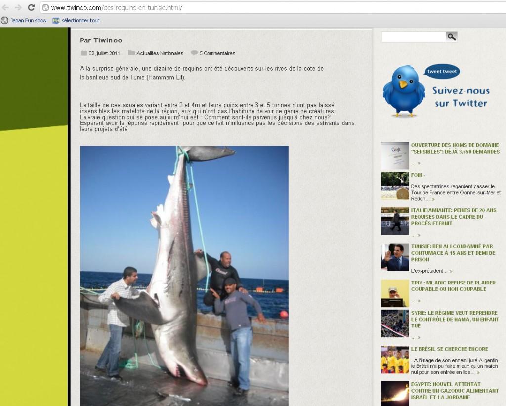 tiwinoo requin hammam lif