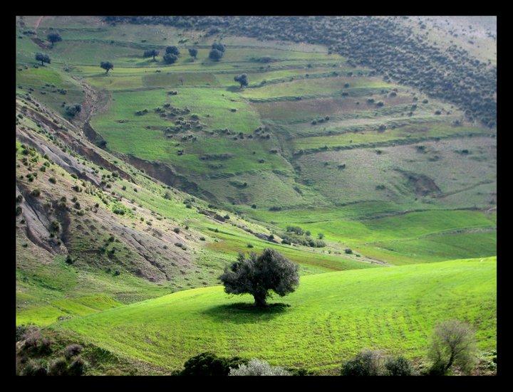 reveillon tunisie verte