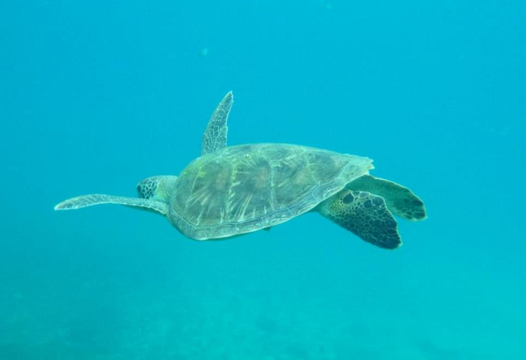 tortue de mer perhentian