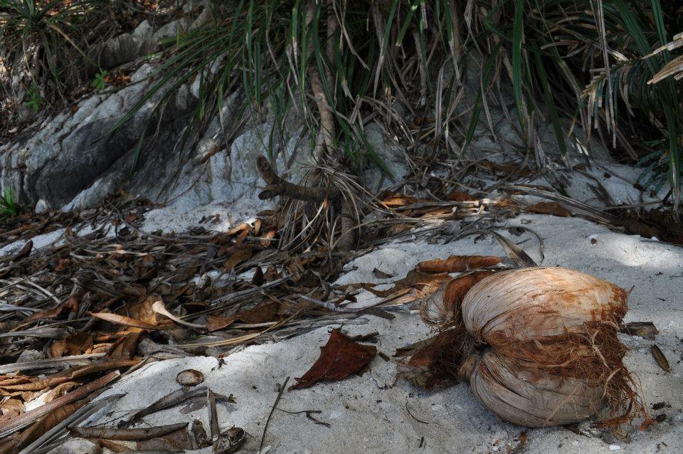 nature sauvage turtle beach perhentian besar