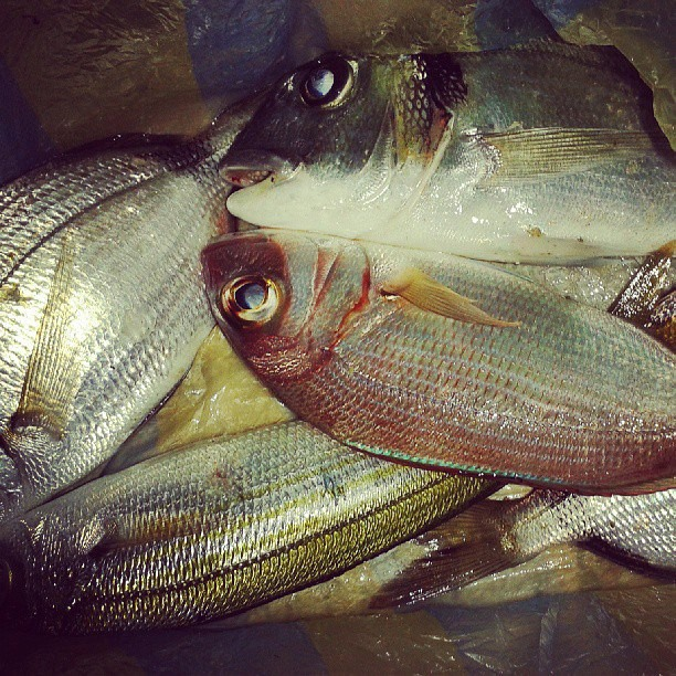 poissons bizerte