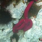 Snorkeling à l'ile de la Galite en Tunisie