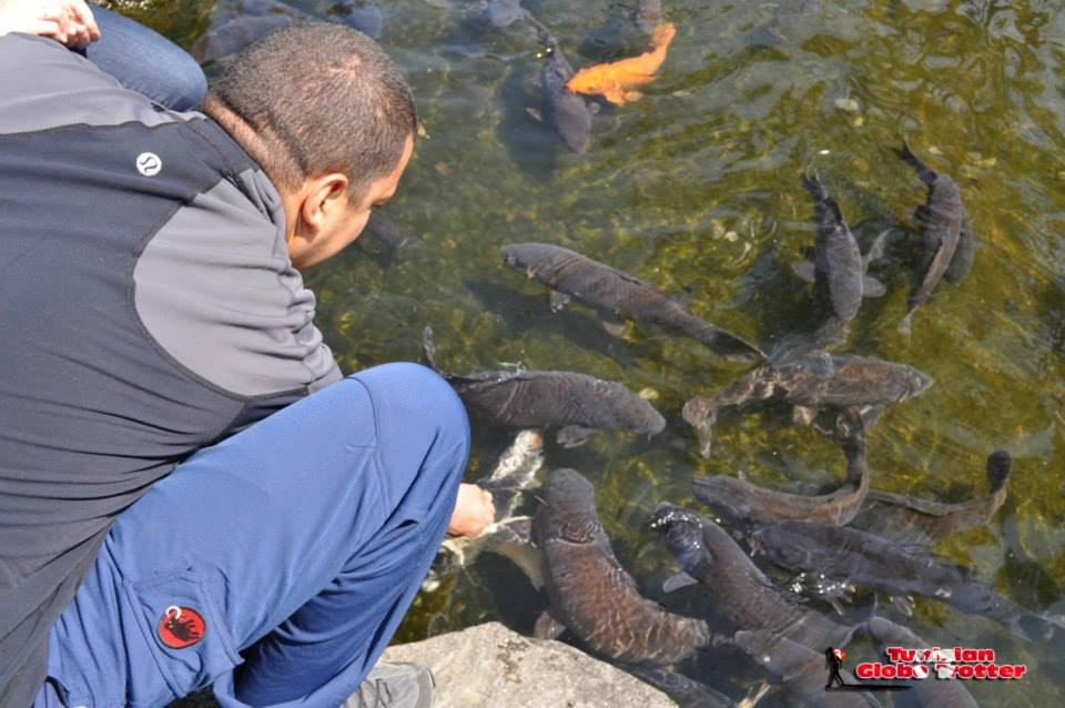 nourrir poisson japon